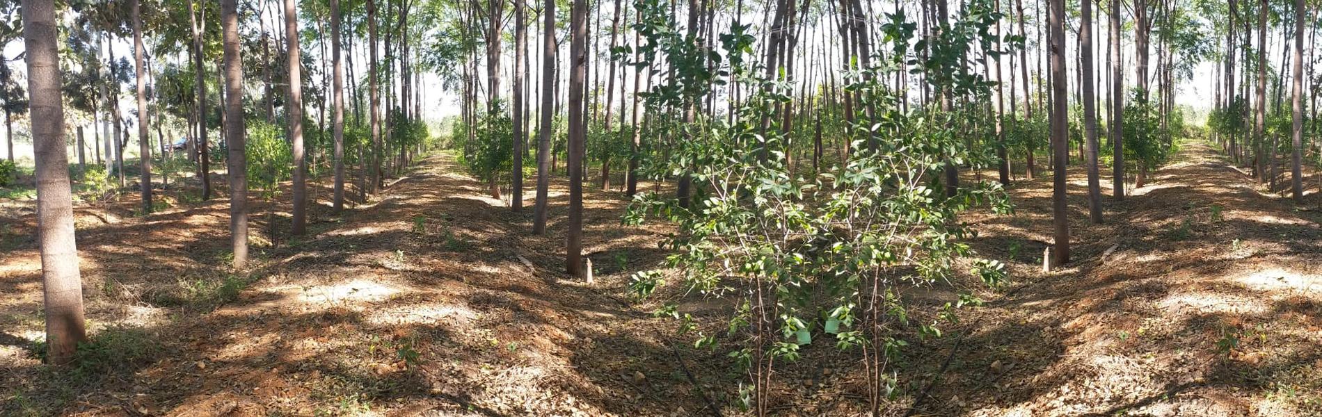 Vanasiri - Agro Forestry Consultancy